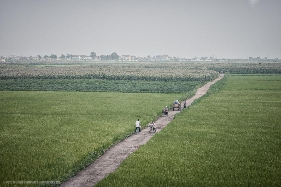 """17. """"Campos de arroz da Coreia do Norte. Bicicleta e os próprios pés são os meios de transporte mais comuns para pessoas comuns"""""""
