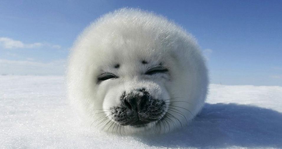 23. Esse filhote de foca combina sua fofura com a neve