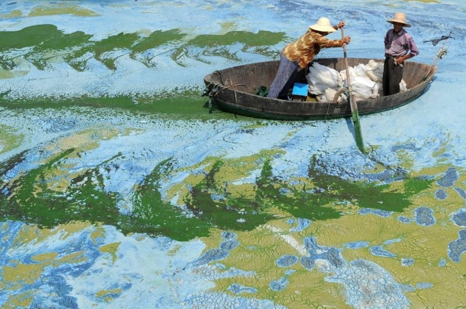 Pescadores remam no lago Chaohu tomado por algas, na China