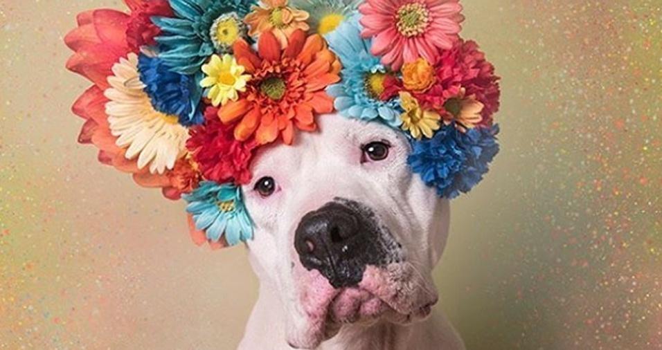 7. A fotógrafa francesa vive nos EUA e luta pelos direitos dos animais, trabalhando em diversos projetos voltados especialmente para cachorros, como Hercules
