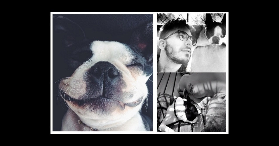 12. O músico Junior Lima é super companheiro da cachorra Bruna Surfistinha; ela é da raça Boston Terrier