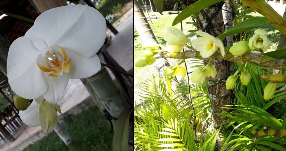 Ana André, de Taubaté (SP), enviou fotos das lindas orquídeas que cultiva