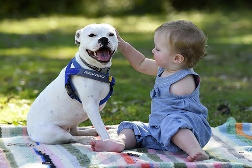 3.ago.2015 - Quando viu o anúncio de que a cachorra Snowy, que perdeu uma das patinhas devido a uma cirurgia, precisava de um lar, Brooke Hodgson não pensou duas vezes e adotou a cachorrinha para sua filha, que nasceu sem o braço esquerdo