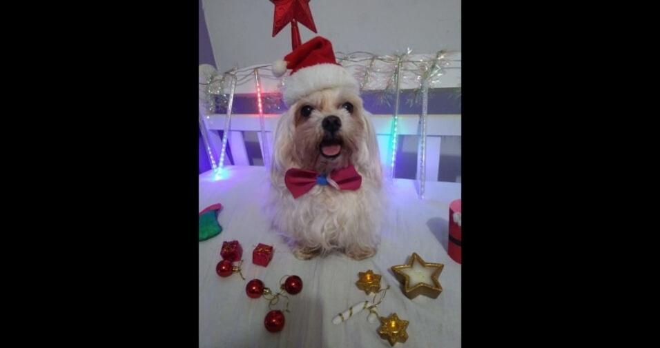 Nicolly Calsavari, de Lins (SP), compartilha foto de seu cachorro Yuck