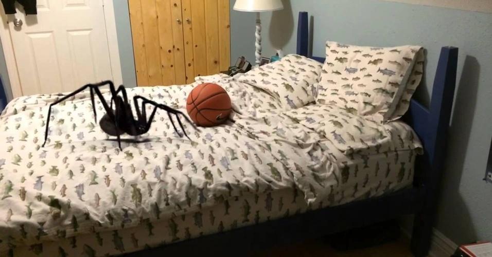 2. Se você tem medo de aranhas, tem mais chances de encontrar uma em sua casa