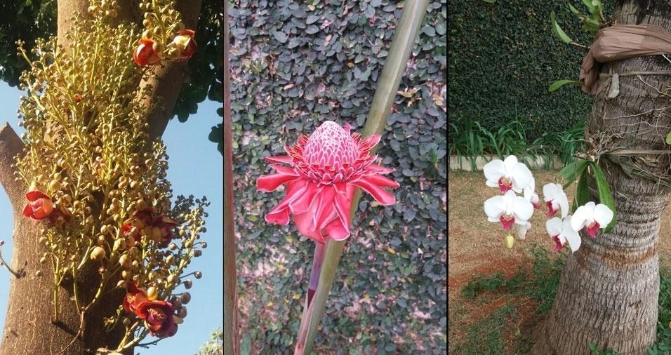Mirian Fochi, de Brasília (DF), apresenta sua coleção de flores
