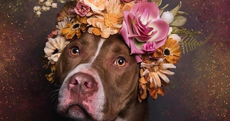 15. As imagens de Sophie despertam o interesse de muitas pessoas, o que ajuda os cães a serem adotados