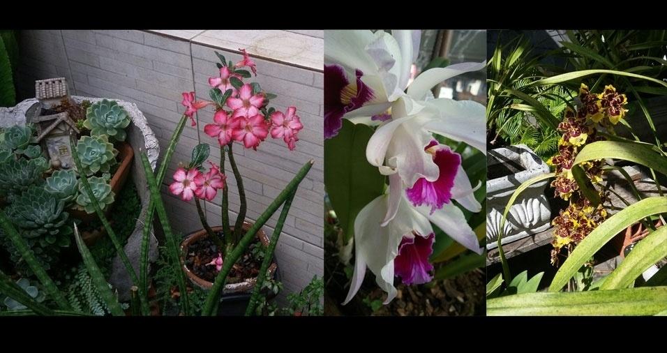"""Sandra A. Cunha, de São Paulo (SP): """"Flores do meu jardim"""""""