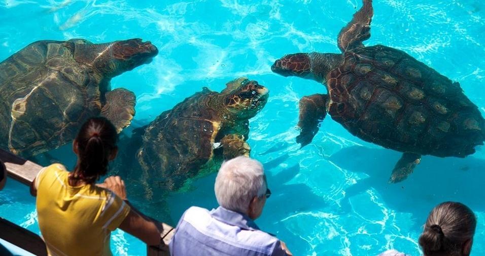 12. Projeto TAMAR - O projeto TAMAR atua na busca pela preservação das tartarugas marinhas ameaçadas de extinção, minimizando os efeitos predatórios da pesca, e conta com uma infraestrutura que inclui cinco tanques de observação, museu, sala de vídeo e exposições, espaço infantil e loja. O espaço é aberto à visitação todos os dias, incluindo feriados, das 09h30 às 17h30, e está localizado na Praia da Barra da Lagoa