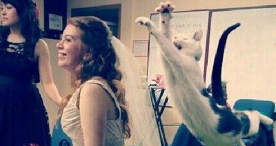 21. Lá vem a noiva! E o gato também!