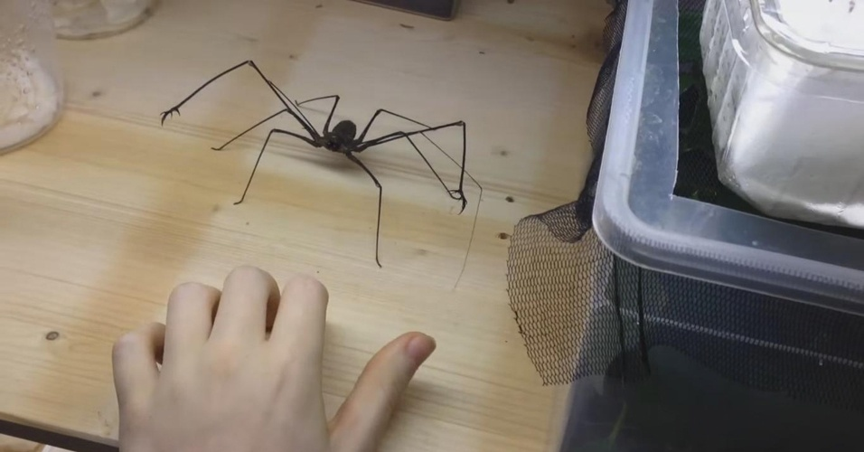 6. Você nunca estará a mais de dois metros de distância de um aracnídeo