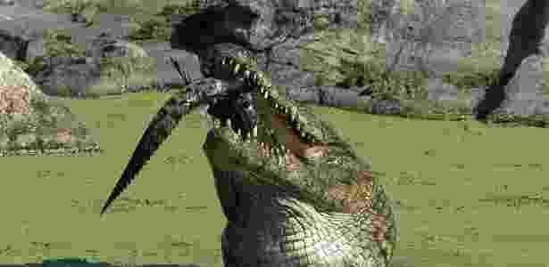 Crocodilo do Nilo é fotografado comento um filhote da mesma espécie - Reprodução/Daily Mail