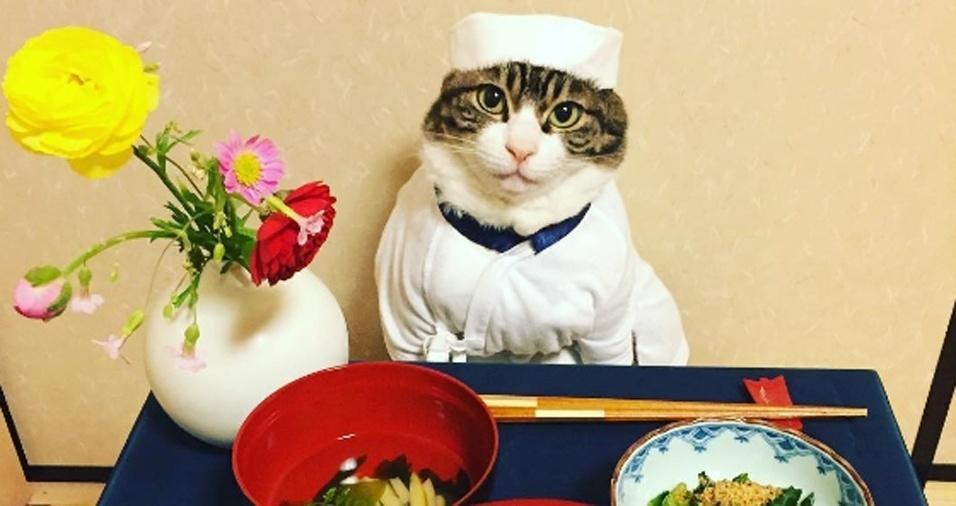 """1. Você foi convidado para um jantar e não sabe com que roupa ir? Pergunte ao gatinho Maro. A humana e cuidadora do felino é Rie Matsui. Além de ser amante da fotografia, a companheira do bichano é apaixonada pela culinária e pela cultura do Japão, onde mora. A princípio, Rie apenas vestia o gatinho para algumas fotos divertidas, mas depois passou a vesti-lo para sentar à mesa junto com ela na hora do jantar. Pelas imagens, fica evidente que Maro é muito tranquilo e não tem problema para posar para a dona. O resultado de tanta fofura está refletido nos mais de 98 mil seguidores dos dois no Instagram. Rie garante que apesar das fotos à mesa, o gato não come a comida de """"humanos"""", apenas as recompensas felinas e apropriadas dadas por ela após os cliques"""