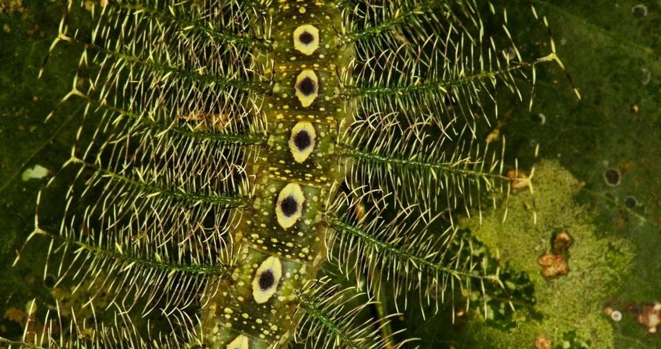 24. Lagarta verde em uma folha