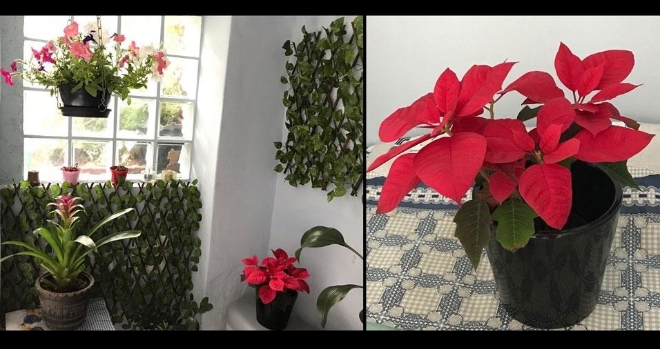 """Neide Carvalho Spadrezani, de São Paulo (SP) : """"Minhas plantas e flores que cuido com muito carinho, pois são presentes da Mãe Natureza!"""""""