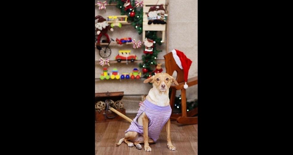 Luiz Eduardo Klein, do Rio de Janeiro (RJ), enviou foto de sua mascote Bella, prontinha para a chegada do Papai Noel