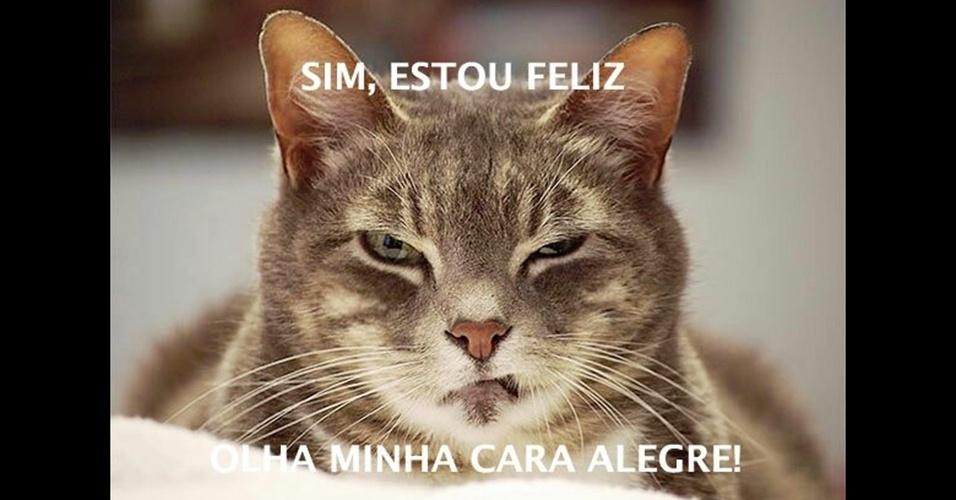 20.jan.2017 - Este felino não parece muito feliz! Envie as imagens engraçadas que você recebe em seu WhatsApp para o BOL pelo número (11) 97335-6855 junto com o seu nome e cidade.