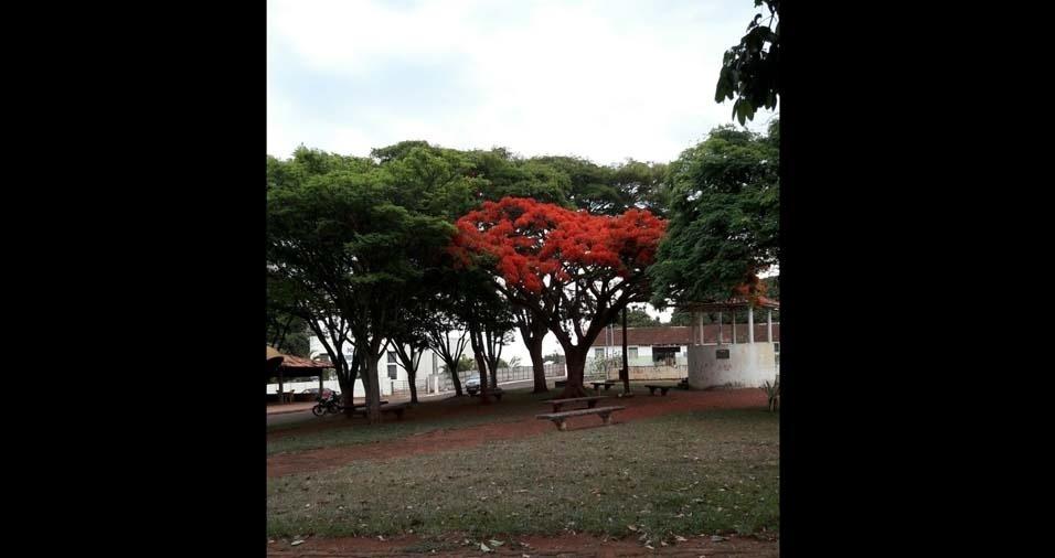 O flamboaiã de Joana Darc Martins, de Minas Gerais
