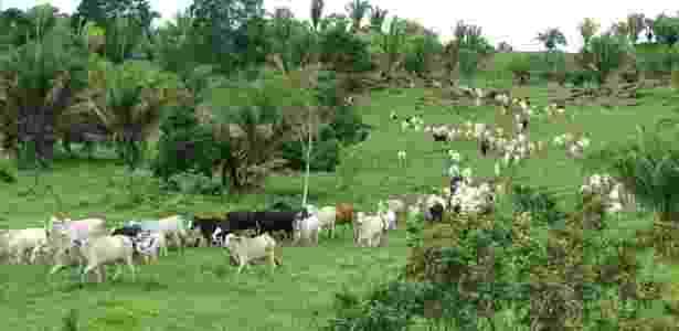 Criação de gado - Reprodução/YouTube