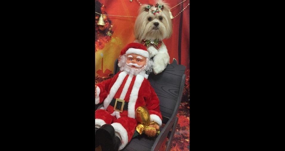 """Os """"doguinhos"""" estão curtindo o clima de Natal! Patrícia Bueno, de Buritama (SP), mandou foto da Meg"""