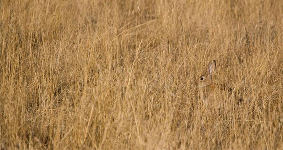 19. Coelho na vegetação seca