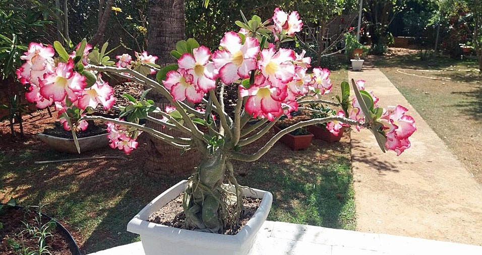 Mirian Fochi, de Brasília (DF), apresenta suas lindas flores