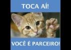 Marcelo Mori/BOL Memes