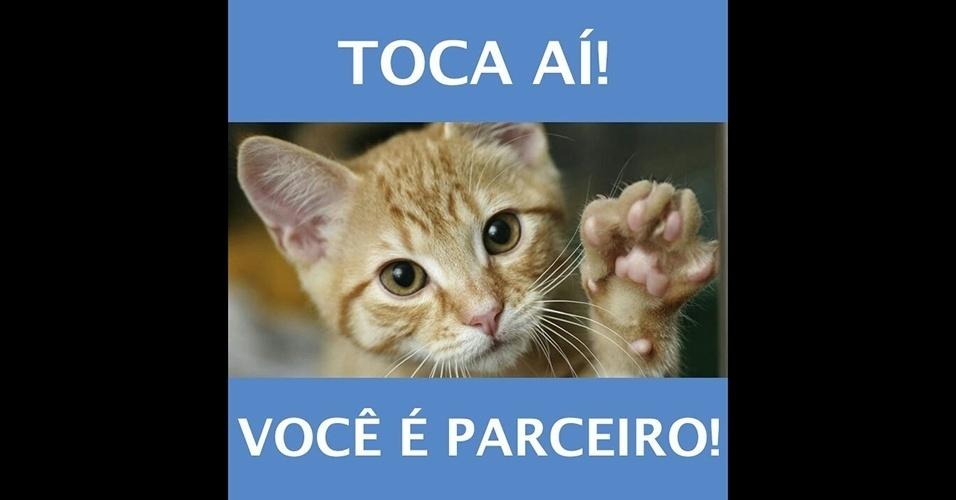 20.jan.2017 - O internauta Marcelo Mori, de São Paulo, mostrou que é mesmo fã de gatinhos e mandou uma série de memes bem fofos com bichanos para o BOL. Faça como ele e envie as imagens engraçadas que você recebe em seu WhatsApp para a gente pelo número (11) 97335-6855 junto com o seu nome e cidade.