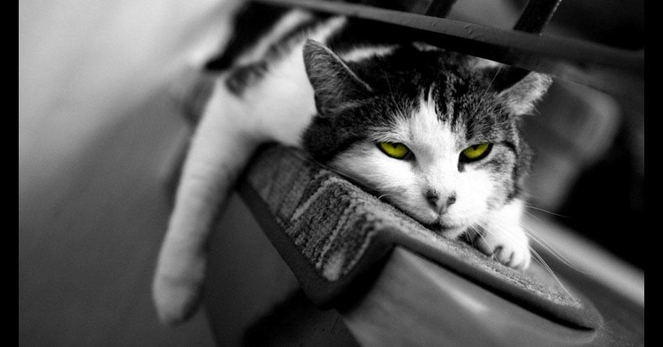 27. Esses olhos verdes...