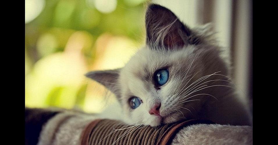 29. Esses olhos azuis...