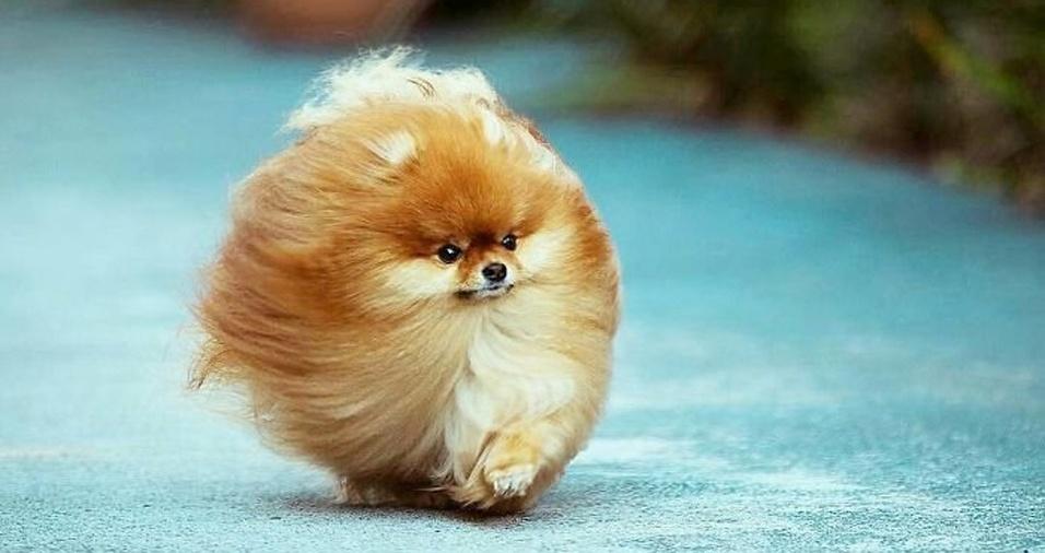 26. Esse cãozinho jogou os pelos ao vento e arrasou na foto