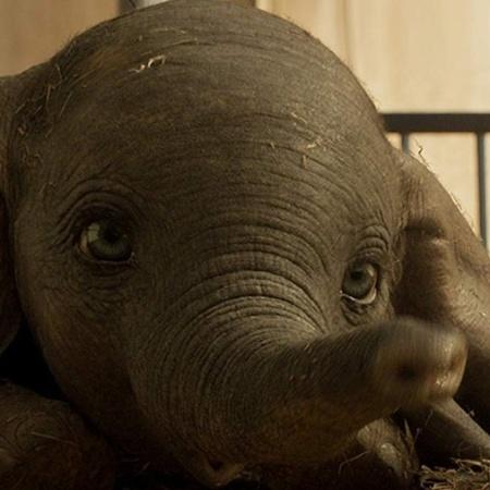 Dumbo (2019) - Divulgação/Walt Disney Pictures