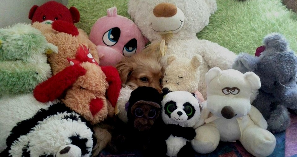 12. Onde está o cachorro?
