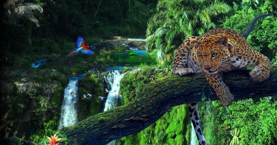 Resultado de imagem para floresta amazônica brasil