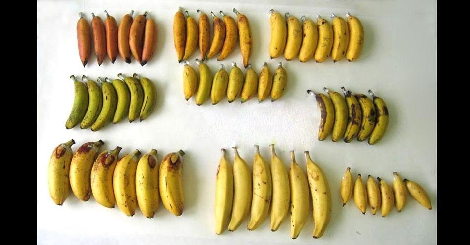17. Existem mais de 300 espécies de bananas que são cultivadas em mais de 100 países