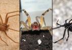 Reprodução/spiders.us/arachnoboards/wikimedia