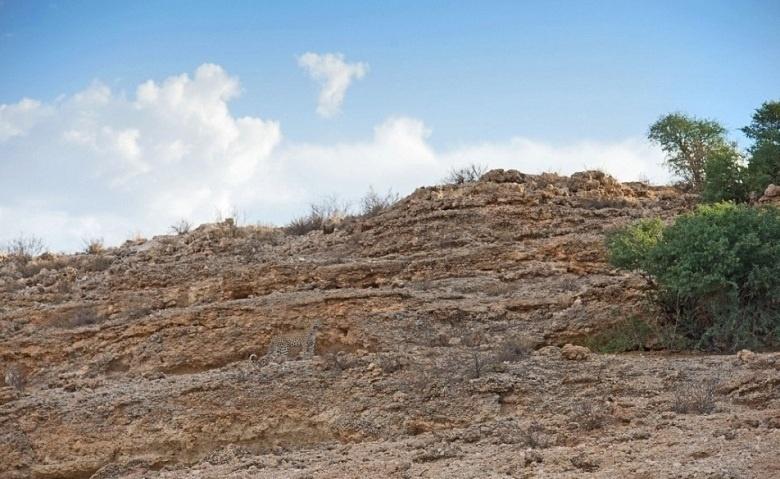 13.mai.2016 - Olhe rápido e responda: onde está o leopardo? Escondido entre pedras e uma montanha, o animal selvagem foi clicado pelo fotógrafo Morkel Erasmus. As informações são do Daily Mail
