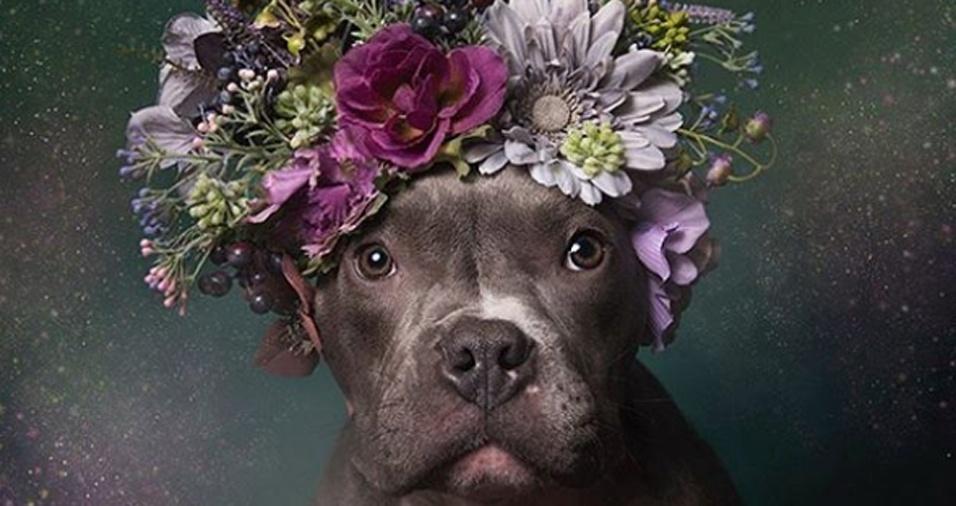 3. Tater Tot aparece na imagem. A série de imagem de pit bulls como coroas de flores, da fotógrafa Sophie Gamand tem como objetivo despertar um novo olhar a respeito dos cachorros que costumam ser taxados como violentos