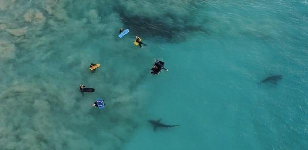 Fotógrafo Sean Scott capta momento em que tubarões se aproximam de surfistas