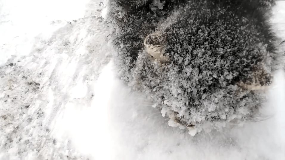 Gato tinha neve e gelo cobrindo o corpo