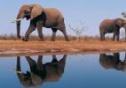China faz apreensão recorde de 156 presas de mamute avaliadas em R$ 60 mi (Foto: Reprodução/wallarthd)