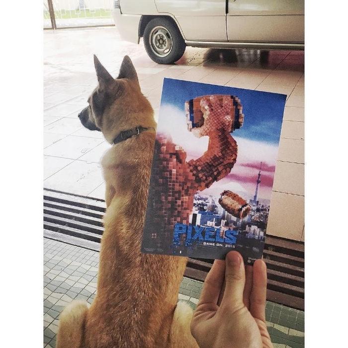5.jan.2016 - Bicho de estimação do artista Jaemy Choong não escapou das curiosas fotos com pôsteres de filmes famosos