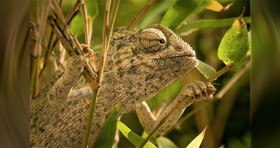 5. Um iguana camuflado entre as folhas