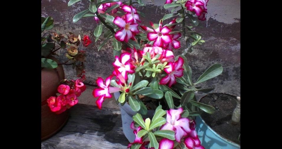 Flores de Maria Ozete, de Alenquer (PA)