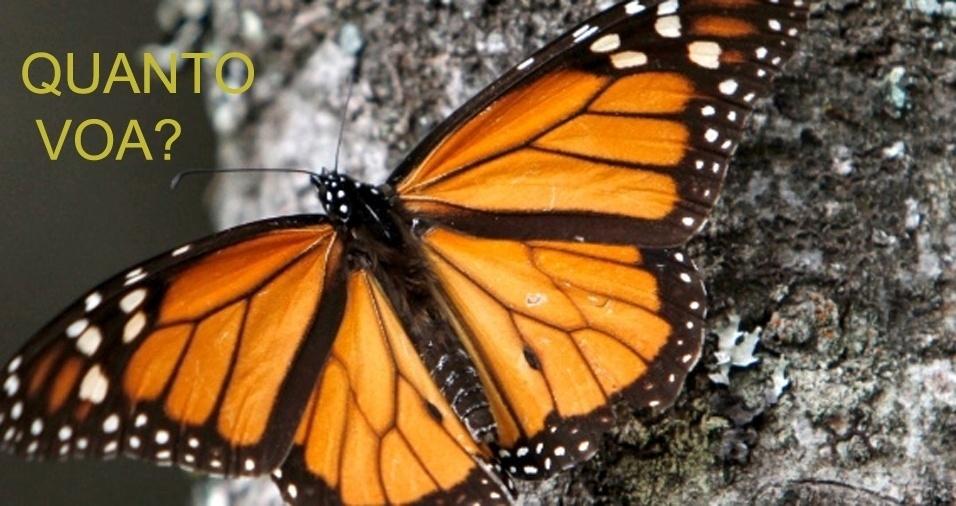 6. Se uma borboleta vive cinco dias e a cada dia ela voa quatro metros, quantos metros ela terá percorrido em uma semana?