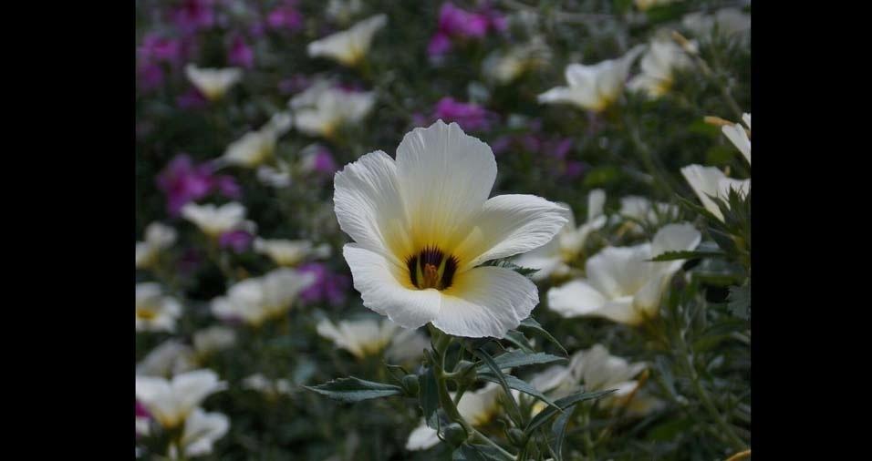 Glauber Fontes Vivas, de Rio das Flores (RJ), enviou fotos de flores que encontrou em seu próprio quintal