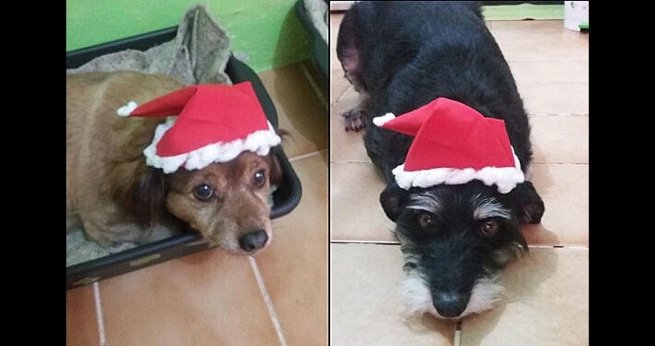 """André e Luana Pelotas (RS), mandaram foto de suas queridas cadelinhas em espírito natalino.  """"Nossas amigonas Preta e Couy"""""""