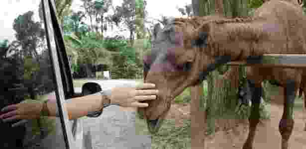 Zoo Safari, São Paulo, Brasil - Reprodução/cidadedesaopaulo - Reprodução/cidadedesaopaulo