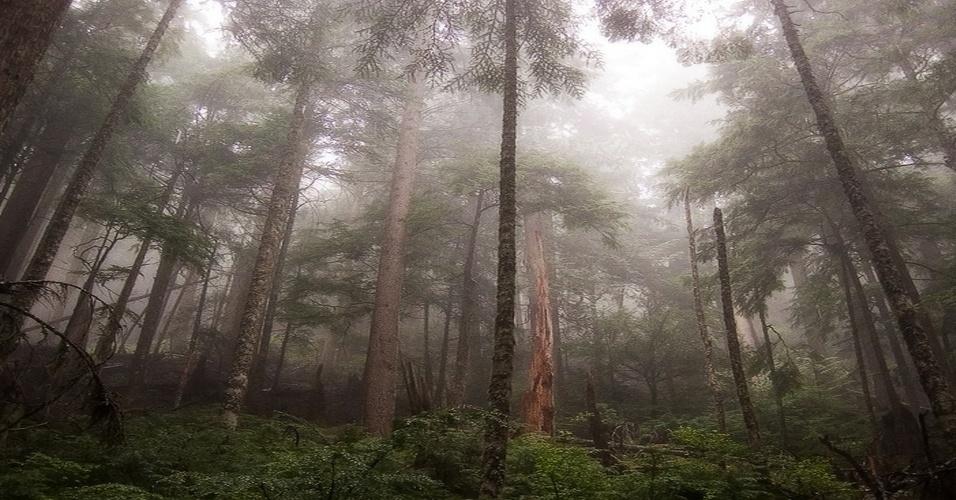 22. Dendrofobia: pavor de árvores e florestas