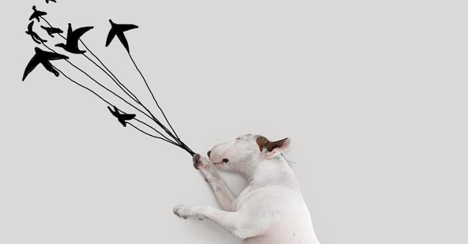 9.dez.2015 - Bull terrier Jimmy Choo é sucesso no Instagram com ilustrações feitas pelo dono Rafael Mantesso